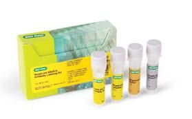 ReadiLink 555/570 Antibody Labeling Kit #1351003