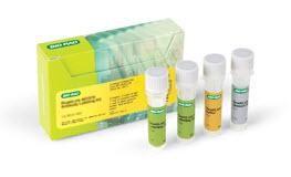 ReadiLink 405/537 Antibody Labeling Kit #1351013