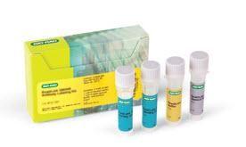 ReadiLink 405/508 Antibody Labeling Kit #1351012