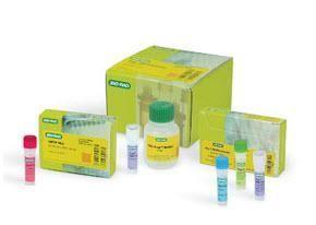 iTaq DNA Polymerase, 250 U (5 U/l), 50 l #1708870