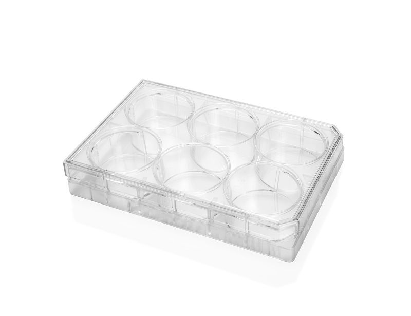 Falcon® 6-Well Flat-Bottom Plate, Tissue Culture-Treated