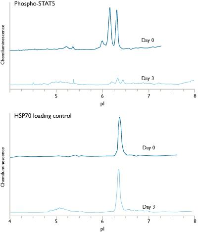 R&D Systems: ProteinSimple NanoPro 1000