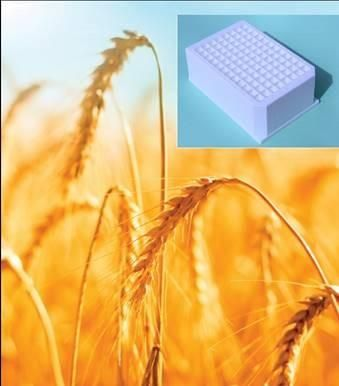 Porvair Sciences 96-Well Toughened Seed Genomics Plate