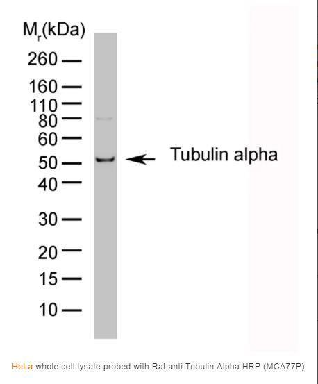 Bio-Rad Rat anti Tubulin Alpha