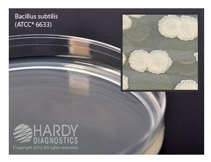 Hardy Diagnostics Prepared Media - General Growth -  Tryptic Soy Agar (TSA), USP