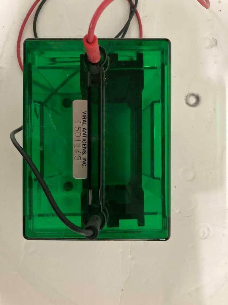 Bio Rad Mini Trans-Blot Cell 153 BR