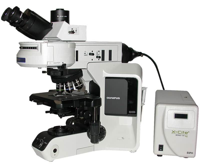 OLYMPUS BX53 FLUORESCENCE MICROSCOPE WITH EXFO X-CITE FLUOR ILLUMINATION & HIGH INTENSITY LED TRANSMITTED LAMPHOUSE