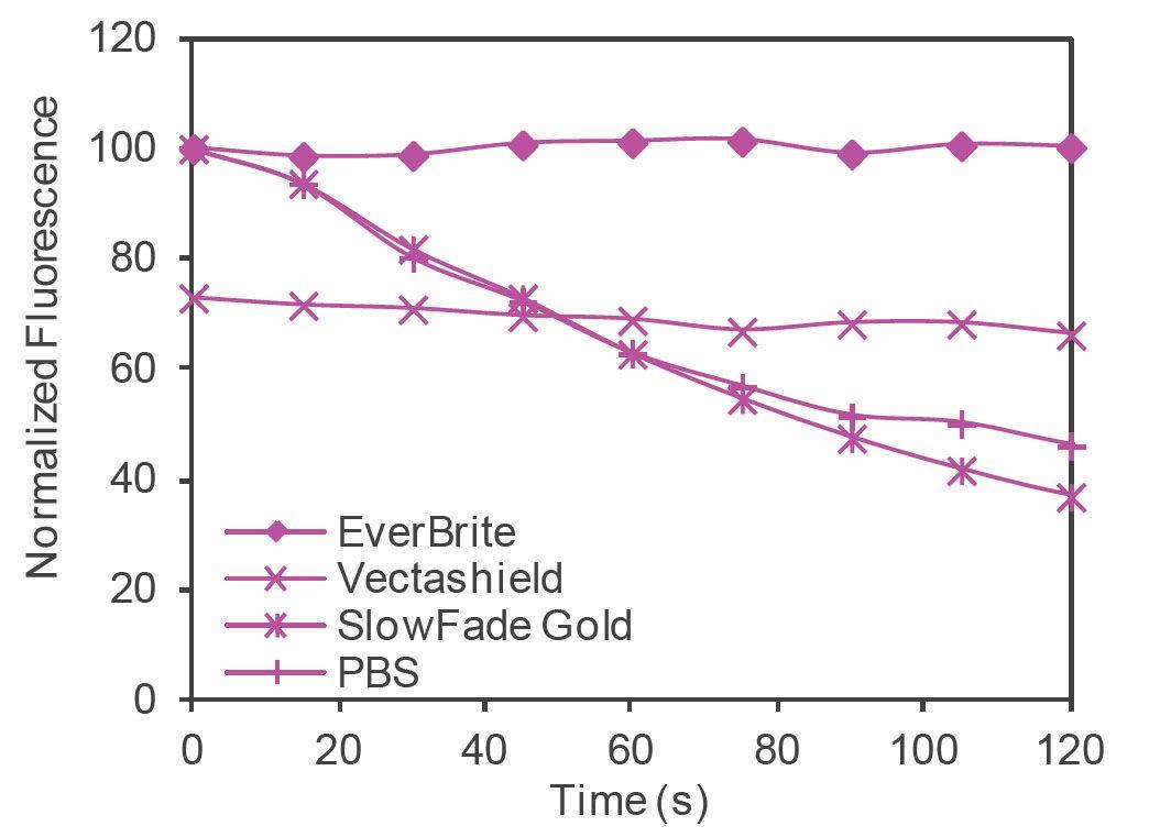 EverBrite™ Mounting Medium
