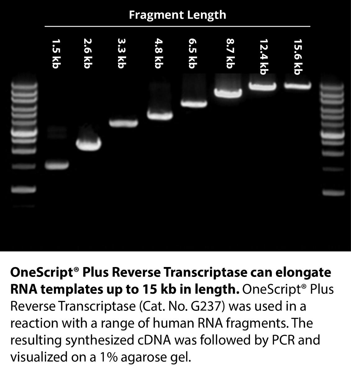 OneScript® Plus Reverse Transcriptase