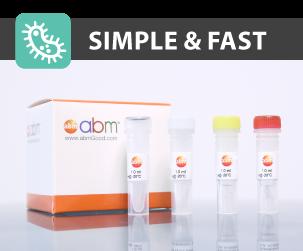 Mycoplasma PCR Detection Kit