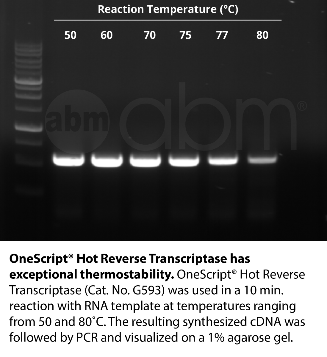 OneScript® Hot Reverse Transcriptase