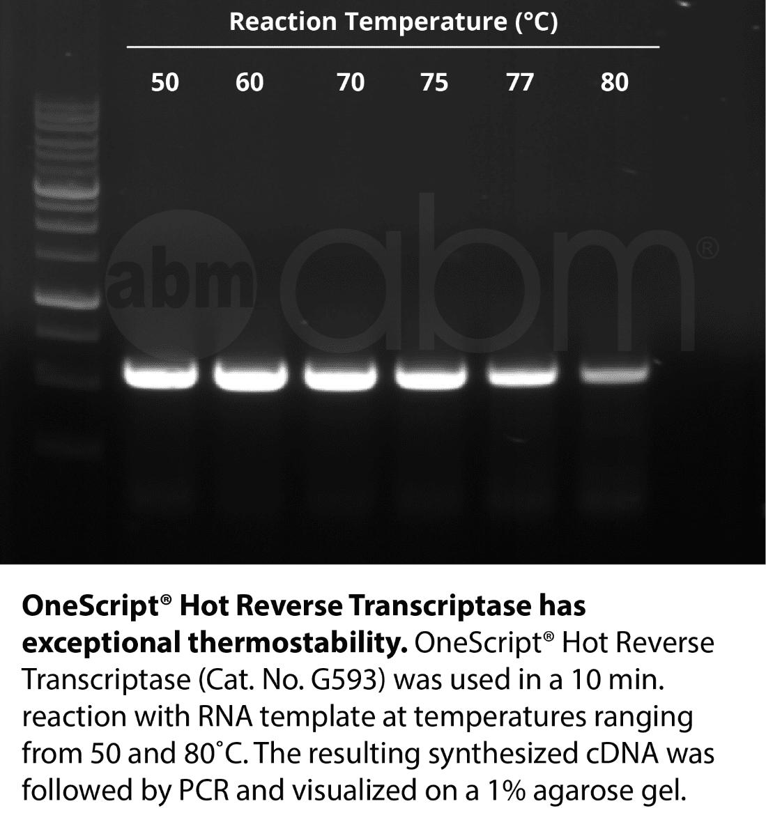 OneScript® Hot cDNA Synthesis Kit