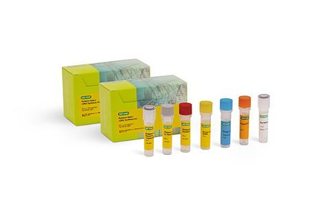 Reliance Select cDNA Synthesis Kit from Bio-Rad